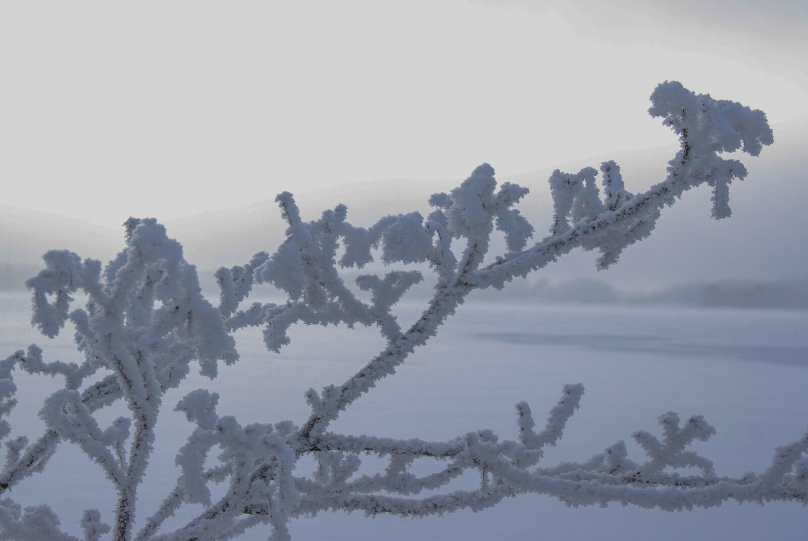 "Pentax K10D sample photo. ""Rime, glow, winter"" photography"