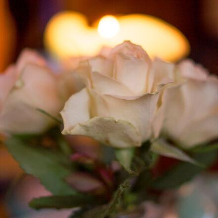 aperture, flower, flowers, love, Sony SLT-A58