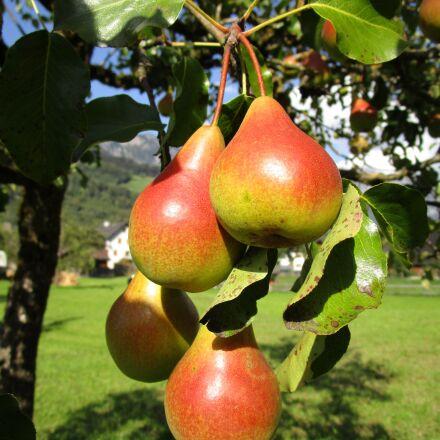 pear, fruit, juicy, Canon IXUS 155