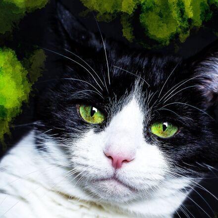cat, black, white, Canon EOS 5D MARK III