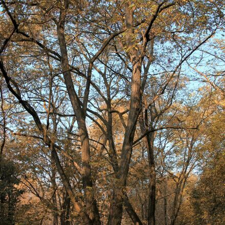 landscape, forest, autumn forest, Canon EOS 1100D