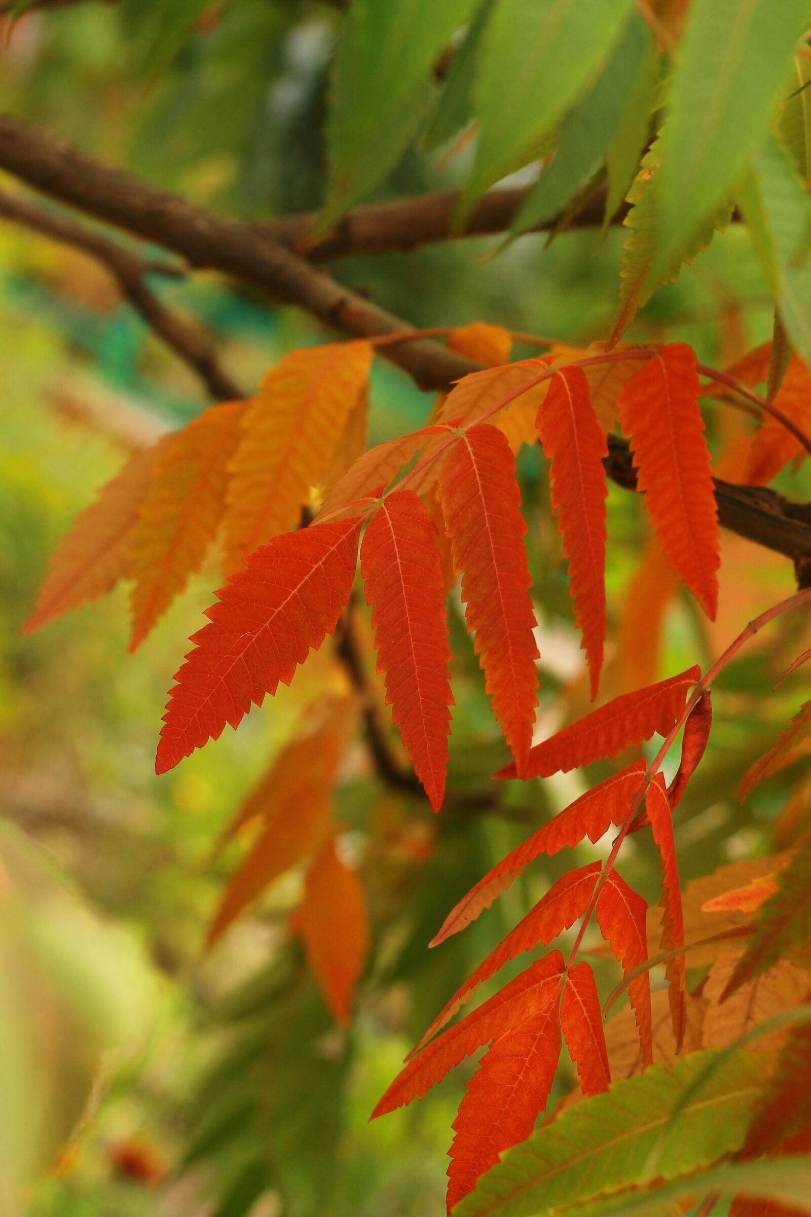 "Canon EOS 1100D (EOS Rebel T3 / EOS Kiss X50) sample photo. ""Autumn, leaves, foliage"" photography"