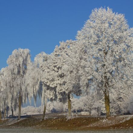 trees, winter, frost, Canon EOS 600D