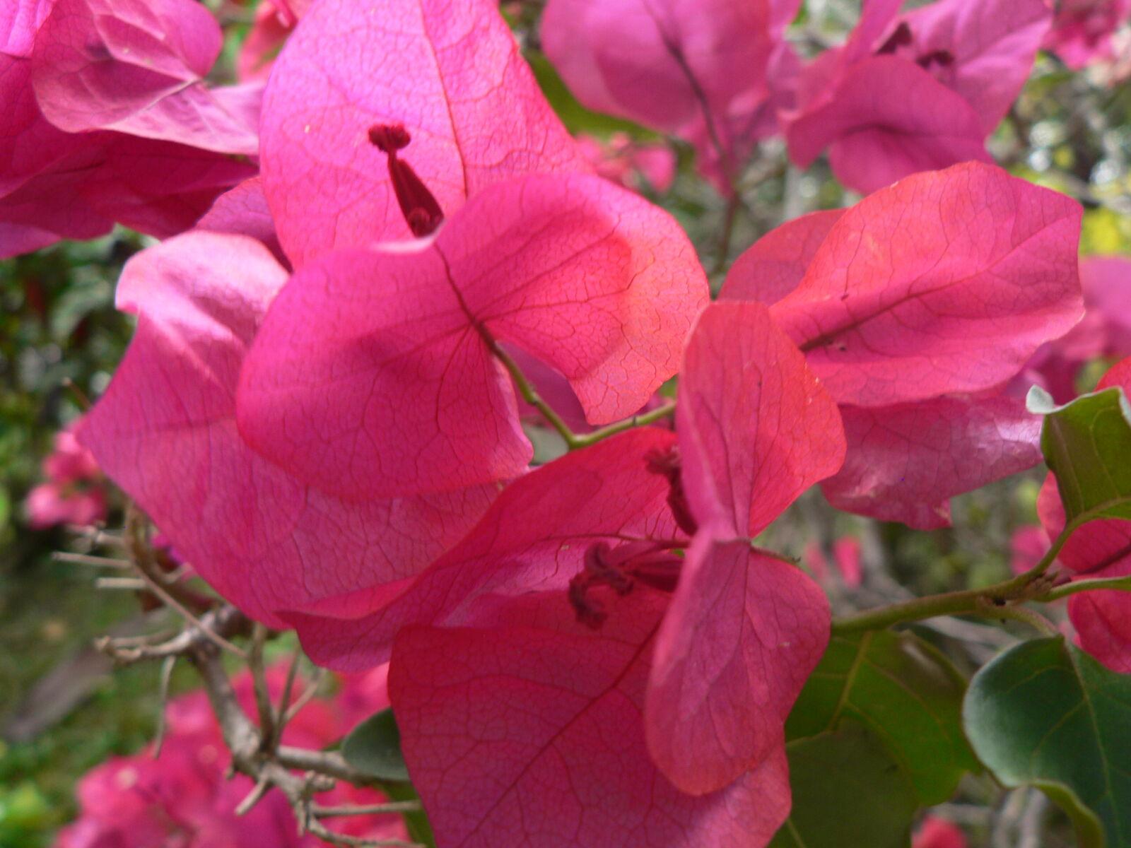colombia, flor, flores, naturaleza