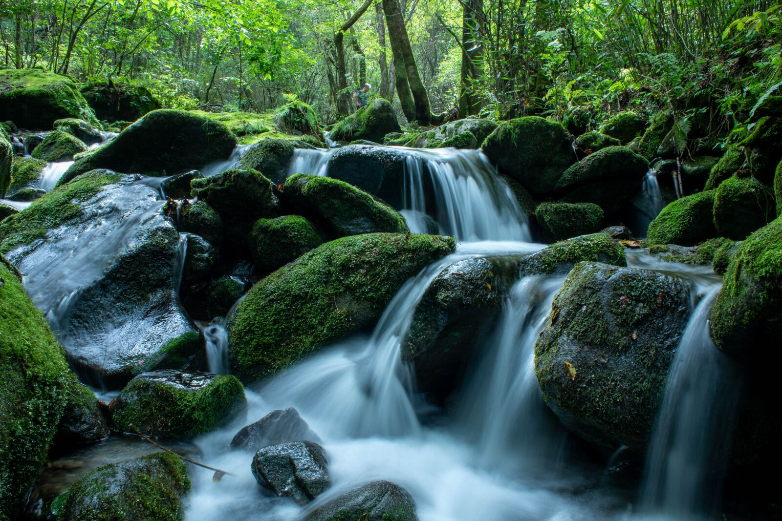 """Canon EOS 5D Mark IV sample photo. """"Nature, valley, moss"""" photography"""