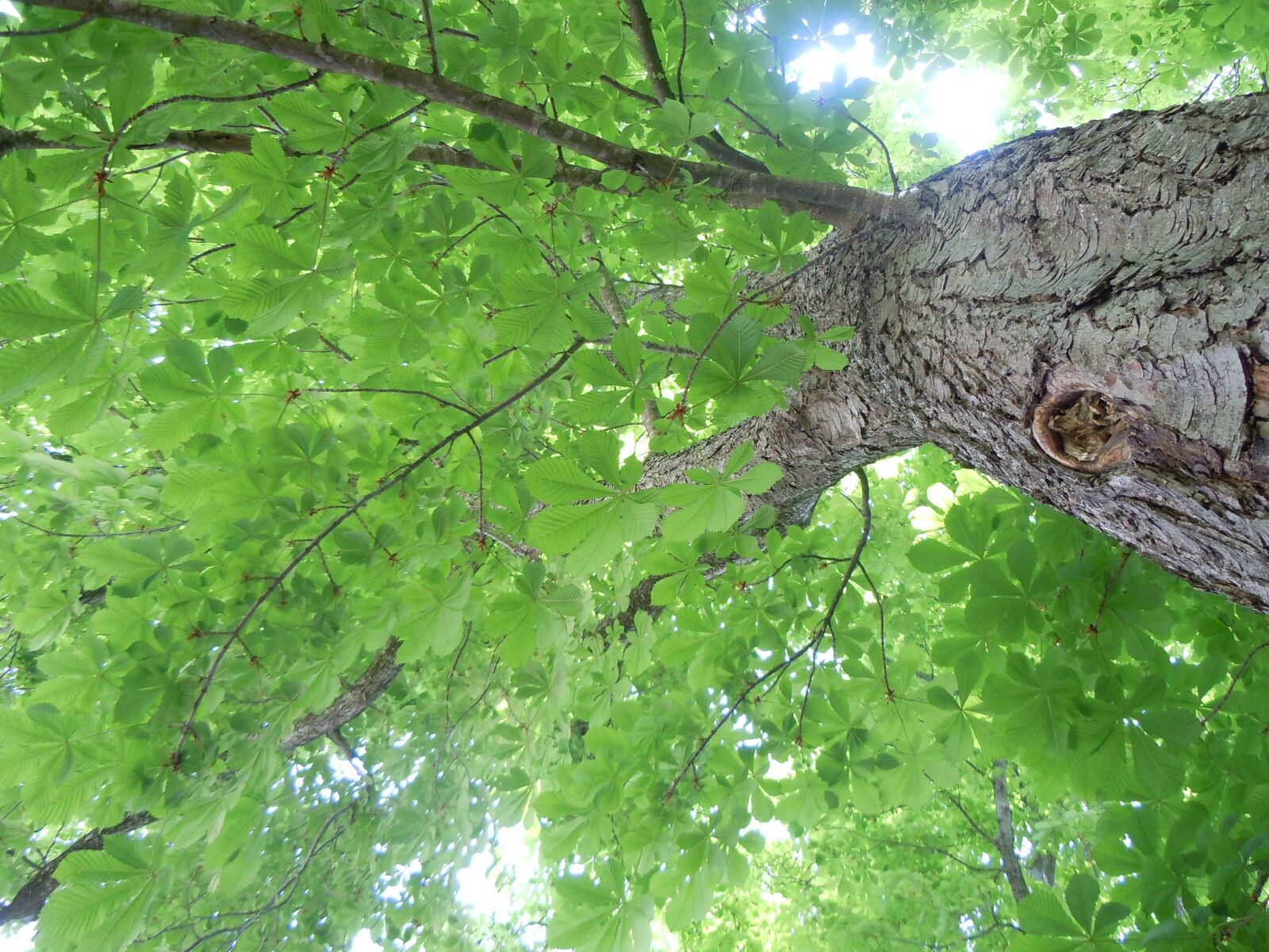 "Nikon Coolpix S8000 sample photo. ""Tree, leaves, foliage"" photography"