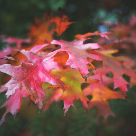 autumn, autumn, colours, autumn, Nikon D5300