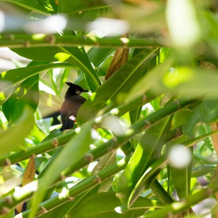 animal, bird, green, leaves, Canon EOS 6D