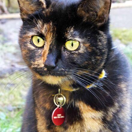 cat, cats, eyes, pets, Fujifilm FinePix F900EXR