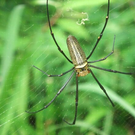 spider, insect, Fujifilm FinePix F70EXR