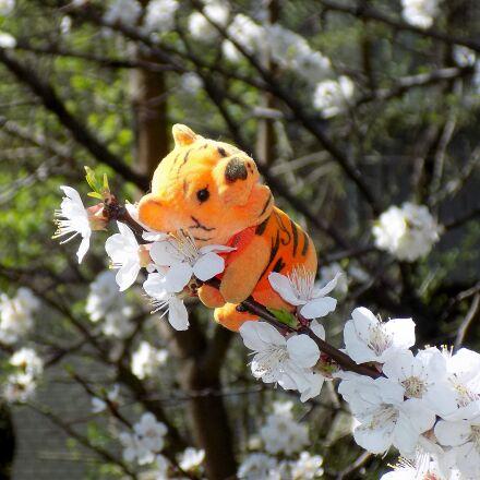 toy, cherry, bloom, Nikon COOLPIX L330