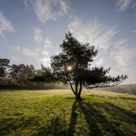 tree, nature, beauty, Canon EOS 6D