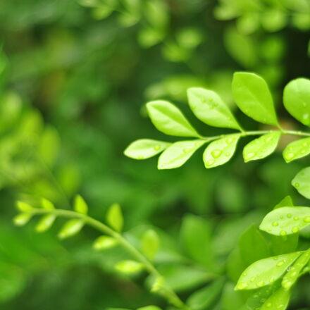 green, green, leaf, leaves, Nikon D90
