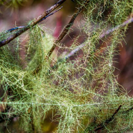 moss, tree, green, Pentax K-5 II S