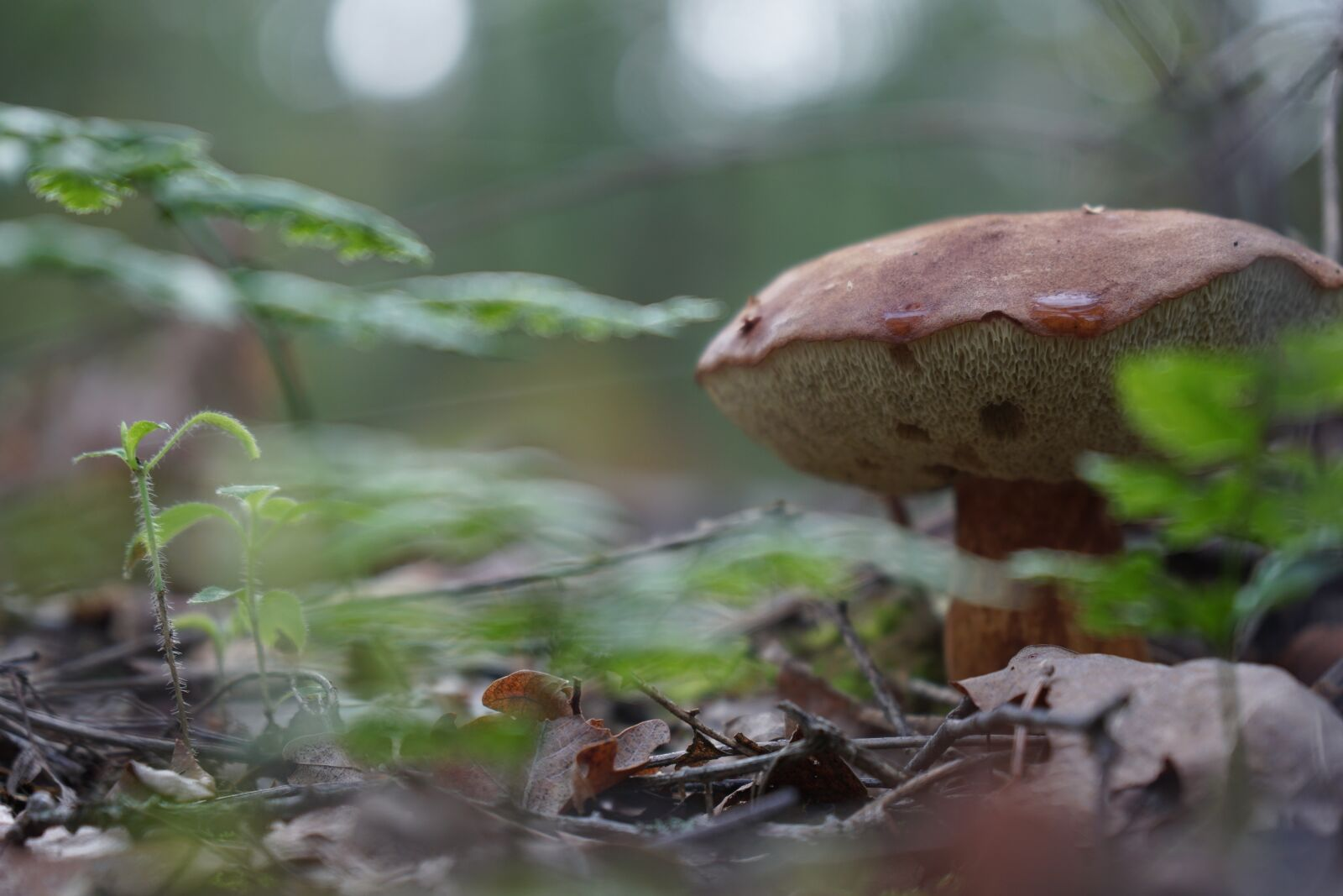 "Sony a6500 sample photo. ""Mushroom, forest, moss"" photography"