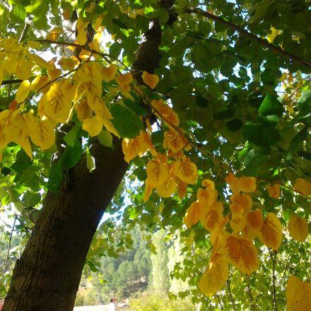 autumn, yellow, green, Samsung GT-S5253