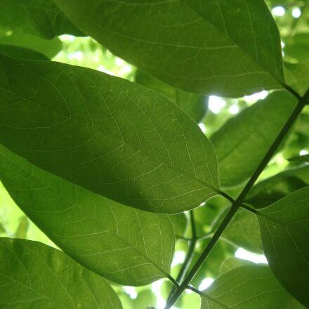 leaf, flora, growth, Sony DSC-T70