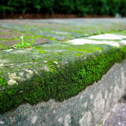 bush, concrete, grass, green, Sony ILCE-6000
