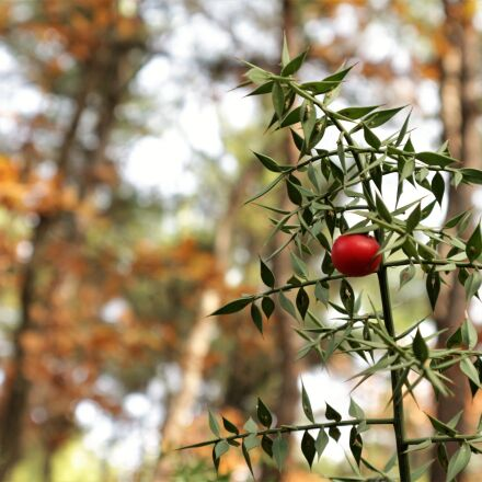 forest berry, nature, forest, Canon EOS M10