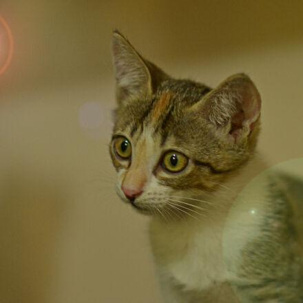 cat, Nikon D3100