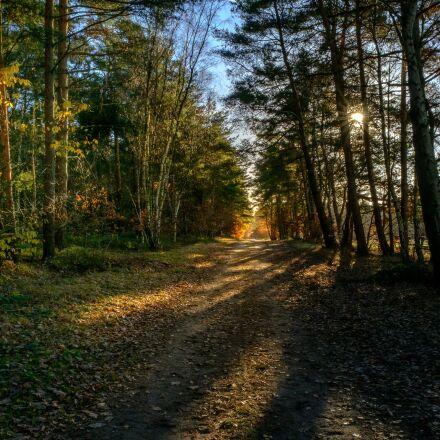 forest, tree, sun, Fujifilm X-T2