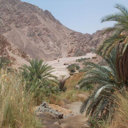 nature, oasis kini, egypt, Nikon COOLPIX L29