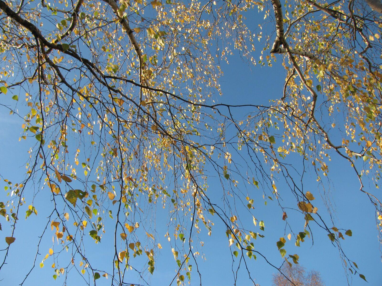 "Canon PowerShot SX110 IS sample photo. ""Listopad, autumn, sky"" photography"