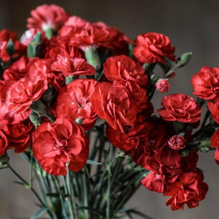 red, petaled, flowers, Nikon D5200