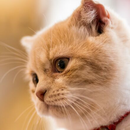 ppt backgrounds, cat, pets, Pentax K-5 II S