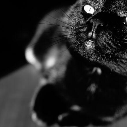 , Canon EOS 6D