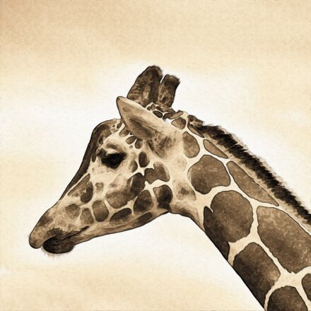 giraffe, animal, savannah, Fujifilm X-Pro1