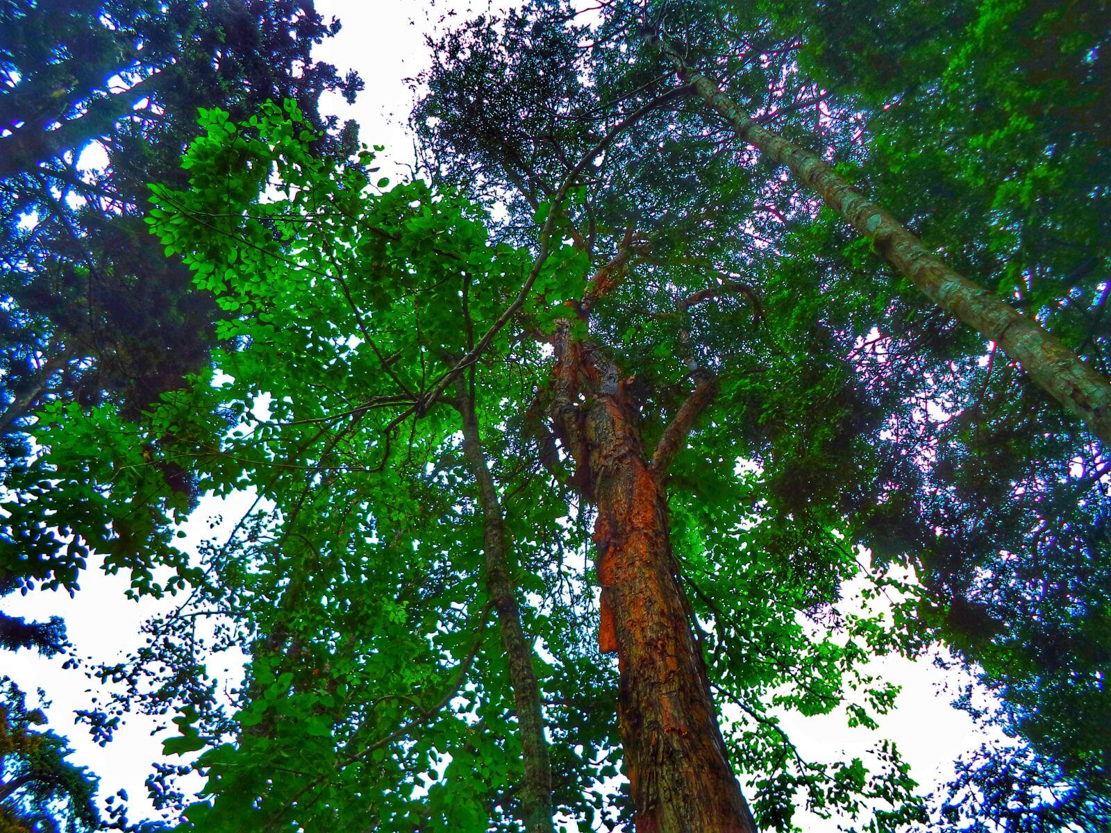 tree, beautiful, green