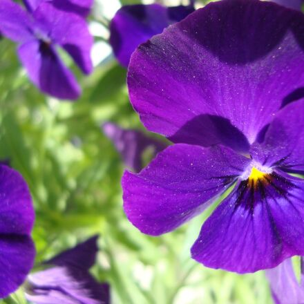 flower, summer, macro, Sony DSC-W210