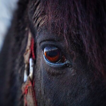 horse, eye, horse head, Sony ILCE-6300