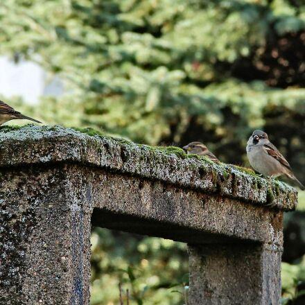 passage, moss, birds, Canon EOS 1100D
