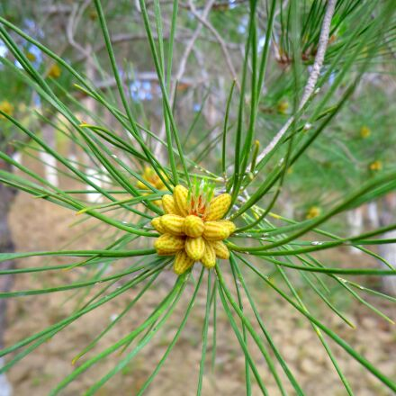 nature, plant, color, Sony DSC-W630
