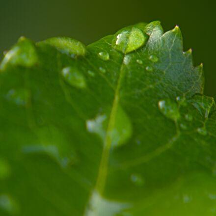 drop of water, drip, Nikon 1 V2