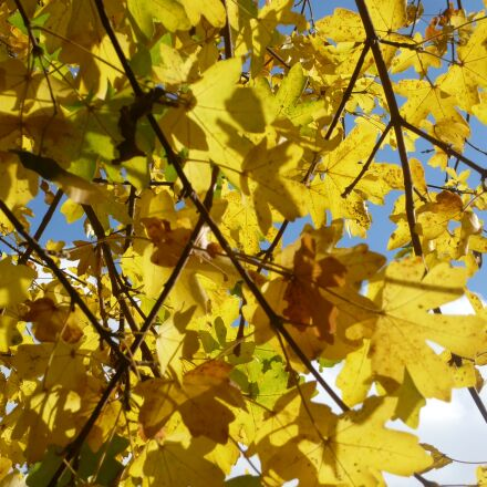 autumn, leaves, october, Panasonic DMC-FX10