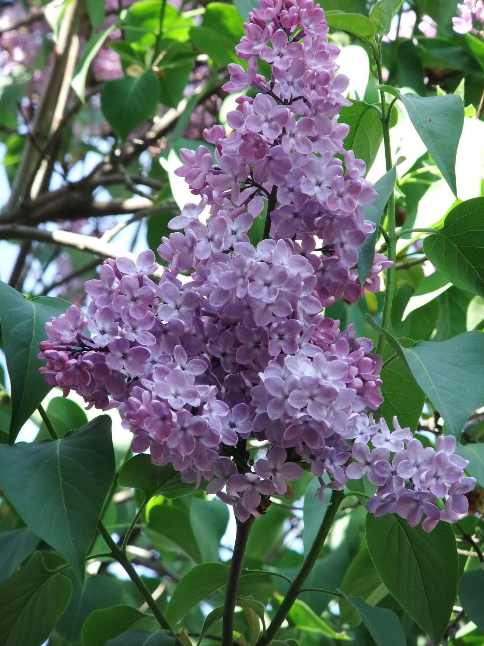 nature, flower, spring