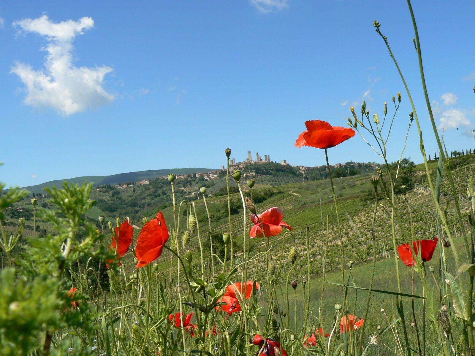 "Panasonic DMC-FZ7 sample photo. ""Poppy, nature, flower"" photography"