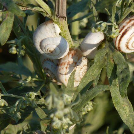 snails, ukraine, nautilus, Panasonic DMC-ZS1