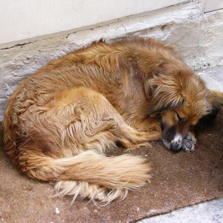 dog, siesta, sleep, Panasonic DMC-FZ2