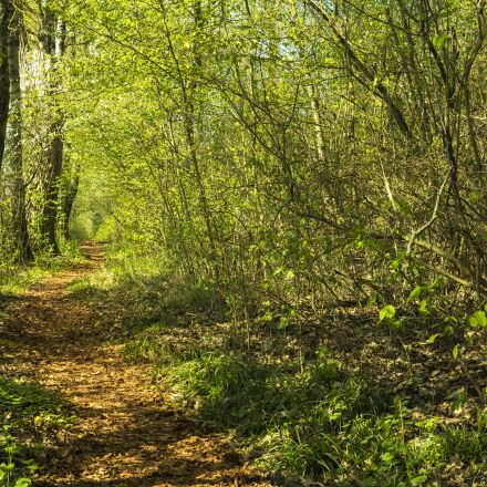 forest, away, trail, Sony ILCE-6300