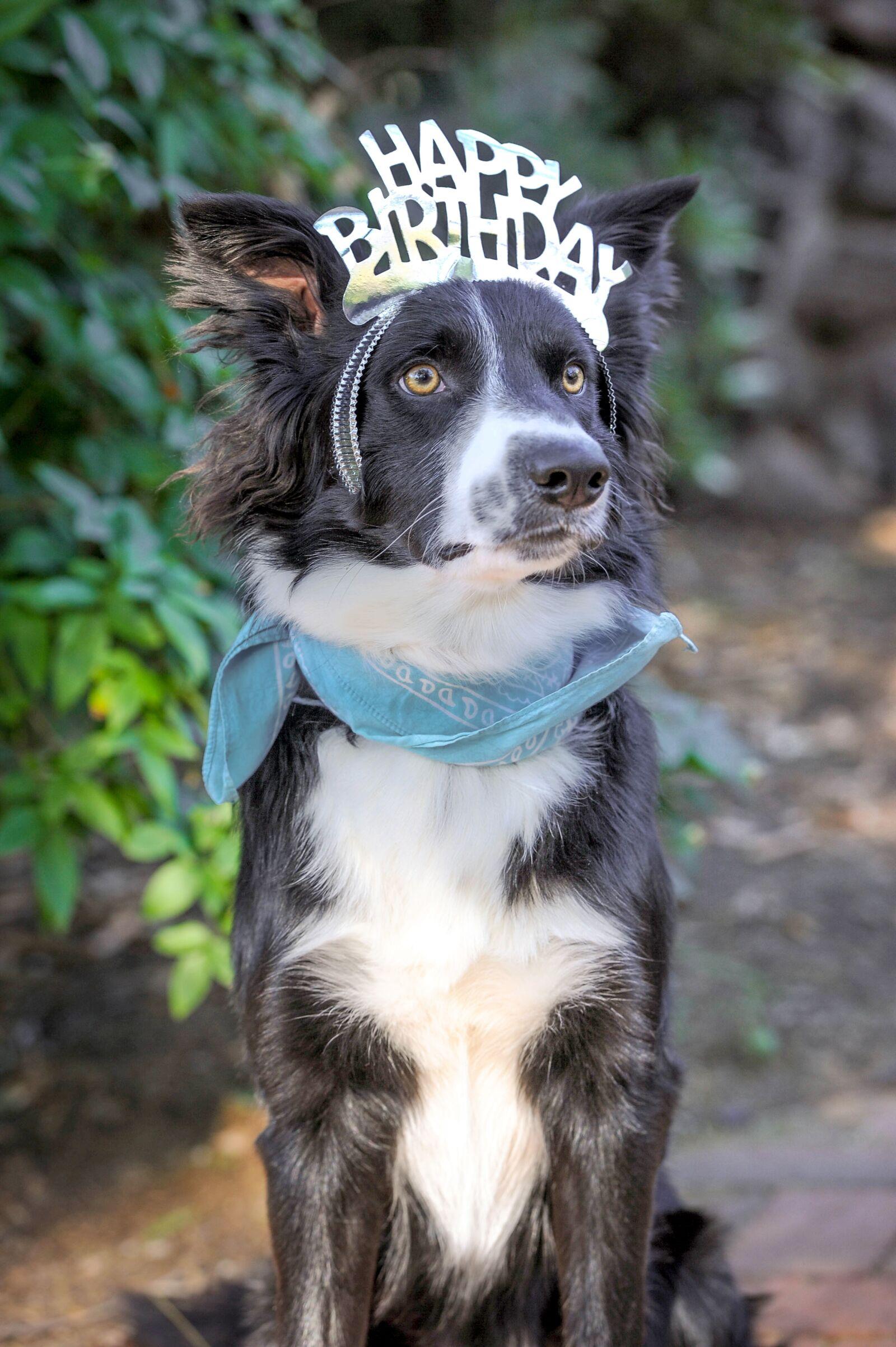 "Nikon D700 sample photo. ""Happy birthday, birthday, dog"" photography"