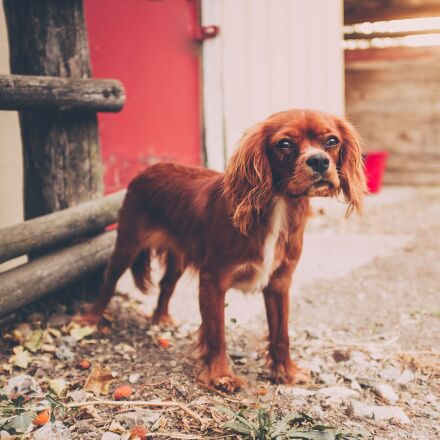 animal, canine, cute, Fujifilm X100S