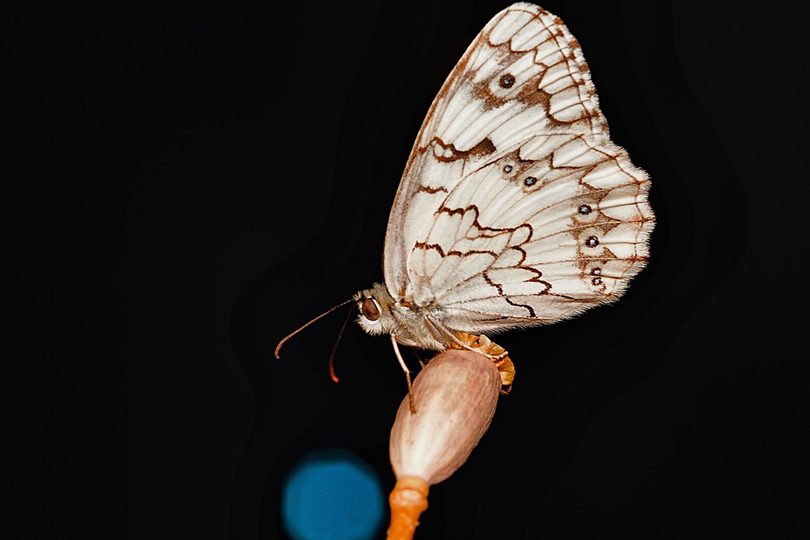 """Canon EOS 7D sample photo. """"Nature, insect, butterfly"""" photography"""