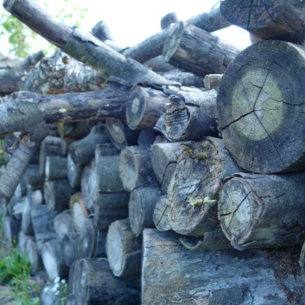 firewood, park, wood, Sony DSC-QX100