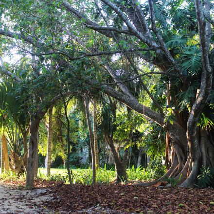 nature, tree, Canon EOS REBEL T5I