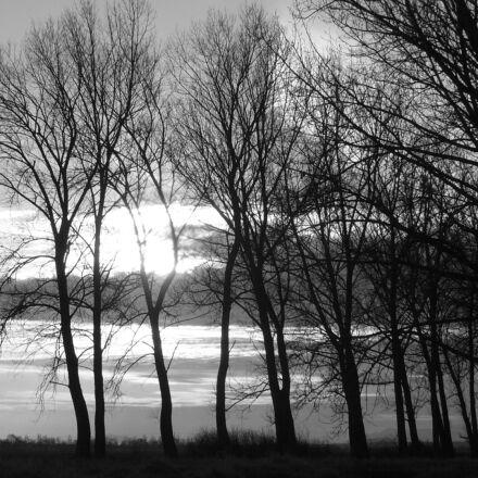 trees, sunset, country, Panasonic DMC-LS2