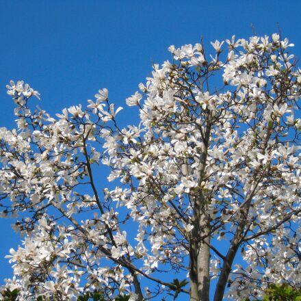 fist, flowers, arboretum, Canon IXY DIGITAL 910 IS
